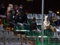 FC Flora U19 - FC Joker (28.02.16)-7874